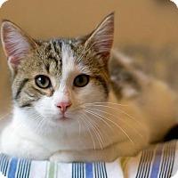 Adopt A Pet :: Pickles - Troy, MI