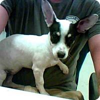 Adopt A Pet :: ELSA - Conroe, TX
