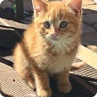 Adopt A Pet :: Marlie 17-0029 - Richardson, TX