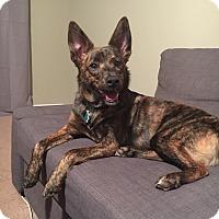 Adopt A Pet :: Tod - Alpharetta, GA