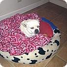 Adopt A Pet :: Colasus