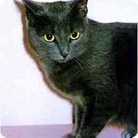 Adopt A Pet :: Lilu - Medway, MA