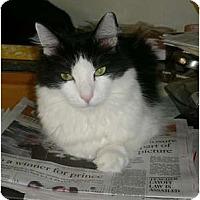 Adopt A Pet :: Lil Man - Brea, CA