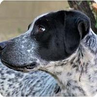 Adopt A Pet :: CODY - Phoenix, AZ