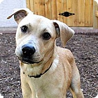 Adopt A Pet :: Roofus - Austin, TX