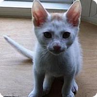 Adopt A Pet :: Maggie - Kirkwood, DE