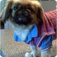 Adopt A Pet :: Wheezer-NC - Chapel Hill, NC
