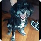 Adopt A Pet :: Oreo