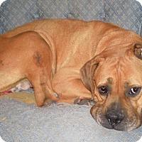 Adopt A Pet :: Rosy Rae - Dayton, OH