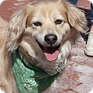 Adopt A Pet :: Chucho