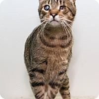 Adopt A Pet :: Harold - Frankenmuth, MI
