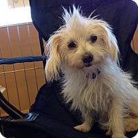 Adopt A Pet :: Petal - Phoenix, AZ