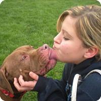 Adopt A Pet :: Blaze - Kimberton, PA