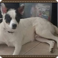 Adopt A Pet :: Jekyll - Scottsdale, AZ
