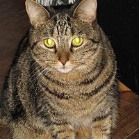 Adopt A Pet :: zz 'Muchi' courtesy listing - Cincinnati, OH