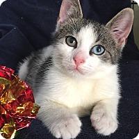 Adopt A Pet :: Andy - Island Park, NY
