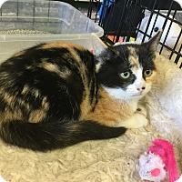 Adopt A Pet :: Maxine - Gilbert, AZ