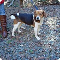 Adopt A Pet :: Rocky - Dumfries, VA