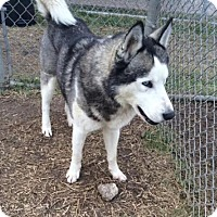 Adopt A Pet :: Seamus--Foster needed!-Coming Soon! - Carrollton, TX