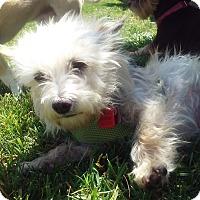 Adopt A Pet :: Sugar - Santa Clara, CA