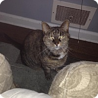 Adopt A Pet :: Stormy - Wantagh, NY
