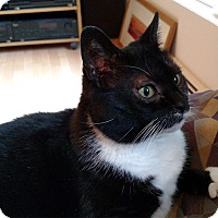 Adopt A Pet :: Karen - Winchendon, MA