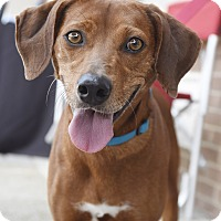Adopt A Pet :: Rita - Chattanooga, TN