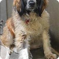 Adopt A Pet :: Toby - Williams Lake, BC