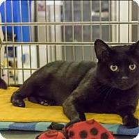 Adopt A Pet :: Paxton - Sherwood, OR