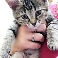 Adopt A Pet :: Kyra - Toledo, OH