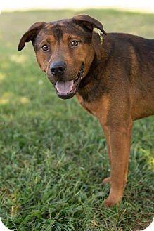 "Hound (Unknown Type) Mix Dog for adoption in Roanoke, Virginia - Keylargo aka ""Kelo"""