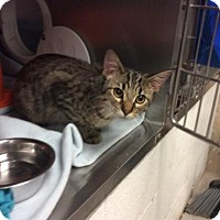 Adopt A Pet :: Potter - Janesville, WI