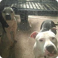 Adopt A Pet :: Nina and Riley - COURTESY POST - Baltimore, MD