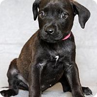 Adopt A Pet :: Evie - Waldorf, MD