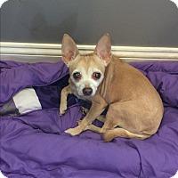 Adopt A Pet :: Lil Bit - Hayes, VA