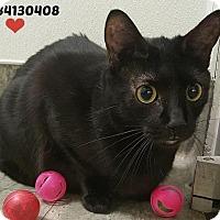 Adopt A Pet :: 34130408 - San Antonio, TX