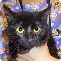 Adopt A Pet :: Starski - Wildomar, CA