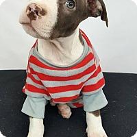 Adopt A Pet :: Johnny - Toledo, OH
