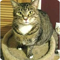 Adopt A Pet :: Cassie - Plainville, MA
