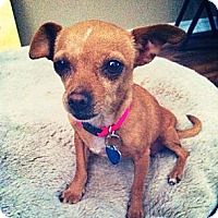 Adopt A Pet :: Bridget - Lake Elsinore, CA