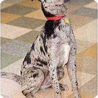 Adopt A Pet :: Kipi - Portland, OR