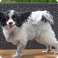 Adopt A Pet :: Oreo - West Richland, WA