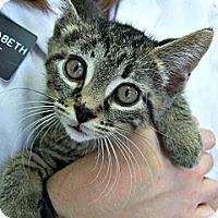Adopt A Pet :: Tuffy - Toledo, OH