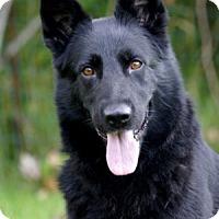 Adopt A Pet :: Leigh - Wayland, MA