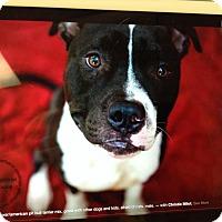 Adopt A Pet :: Benzo - Scottsdale, AZ