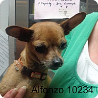 Adopt A Pet :: Alfonzo - baltimore, MD