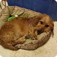 Adopt A Pet :: Taylor - Homer, NY