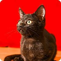 Adopt A Pet :: Jameson - Athens, GA