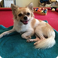 Adopt A Pet :: Buddy - Terra Ceia, FL