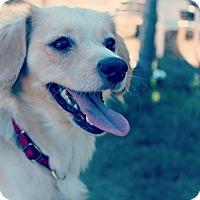 Adopt A Pet :: Gina - Surrey, BC